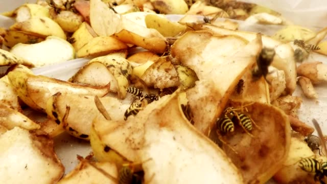 POV Flies and Wasps Eat Fruits and Fly Close Up video