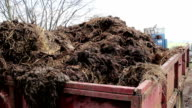 Flies Around Manure Collected from Farm in Red Trailer Truck - Rural Agriculture Machines / Life video
