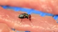 Flies feeding video