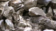 HD: Flies on Mountain of Oyster Shells, Pull Out video