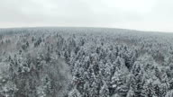Flight above winter forest on the north, aerial panoramic view. video