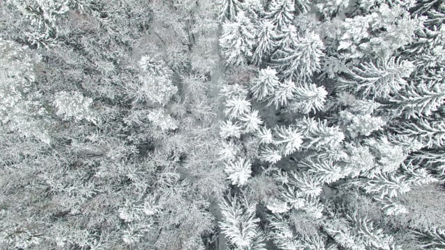 Flight above winter forest on the north, aerial top view. video