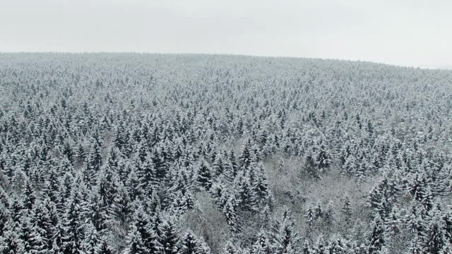 Flight above winter forest on the north, aerial view. video