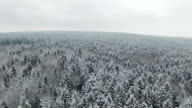 4K. Flight above winter forest on the north, aerial view. video