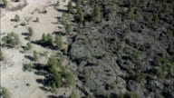 Flight Along Tree Line In El Malpais Conservation Area  - Aerial View - New Mexico,  Cibola County,  United States video
