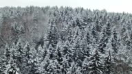 Flight and takeoff above winter forest on the north, aerial view. video