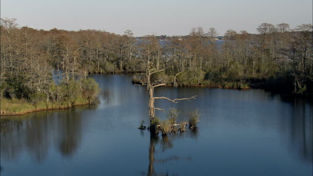 Flight Drifting Down Creek In Bull Neck Swamp Research Forest  - Aerial View - North Carolina,  Washington County,  United States video