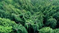 Flight Into Jurassic Valley video