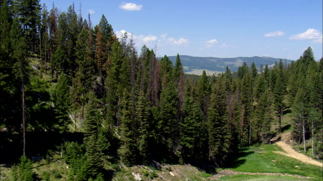 Flight Lifting From A Clearing In the Trees  - Aerial View - Montana,  Granite County,  helicopter filming,  aerial video,  cineflex,  establishing shot,  United States video