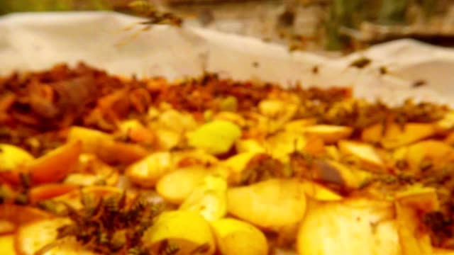 Flight of Wasp from First View among Many Wasps over  Chopped Pears Close up video