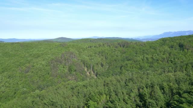 AERIAL Flight over a Mediterranean forest video