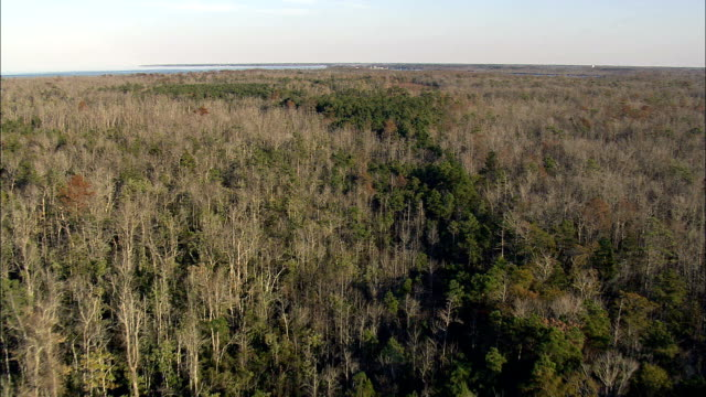 Flight Over Bull Neck Swamp Research Forest  - Aerial View - North Carolina,  Washington County,  United States video