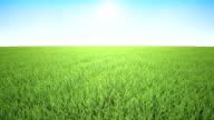 Flight over grass, sunrise video