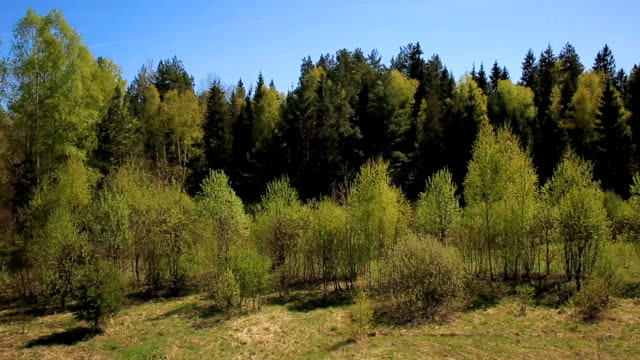 flight over green forest in a Sunny day video