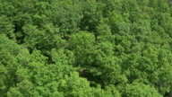 AERIAL Flight over green tree tops of a Mediterranean forest video