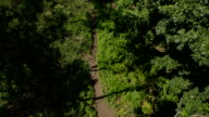 Flight over the Footpath in the Forest video