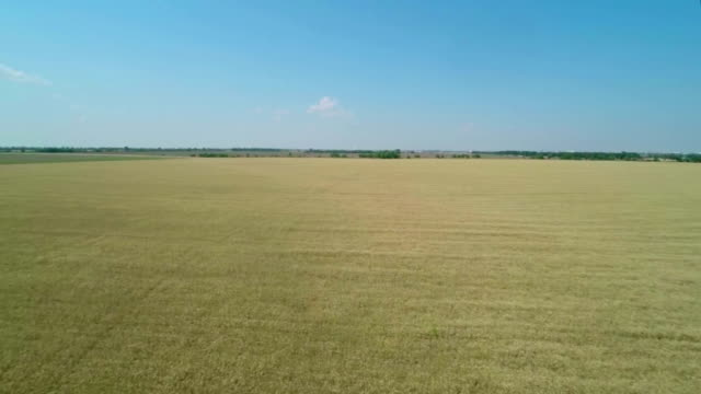 Flight over the Wheat Field. video