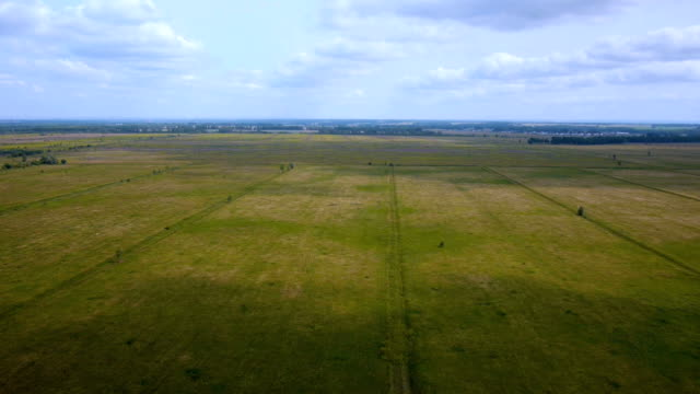 AERIAL: Flight over the wheat field video