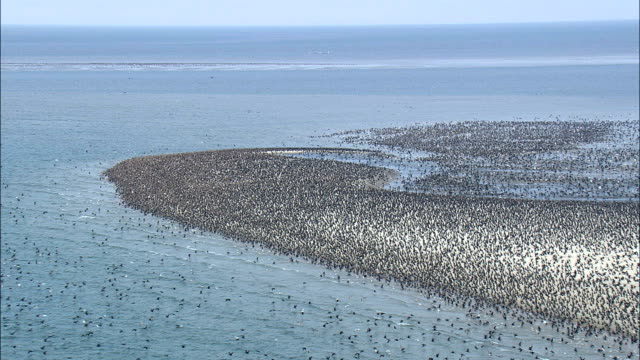 Flight Over thousands Of Birds  - Aerial View - North Carolina,  Carteret County,  United States video
