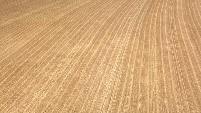 AERIAL 4K: Flight over Wheat Field video