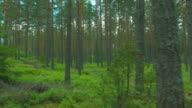 Flight trough forest video