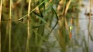 Float fishing video