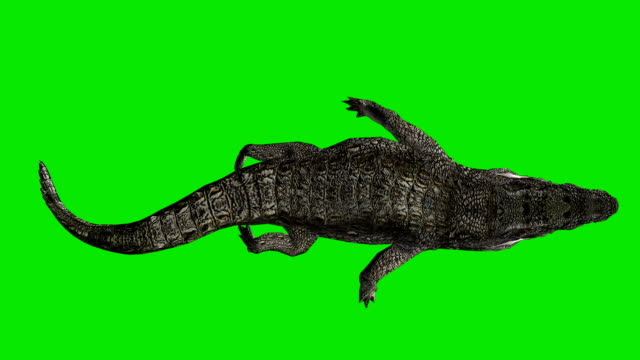 Floating Crocodile Green Screen (Loopable) video