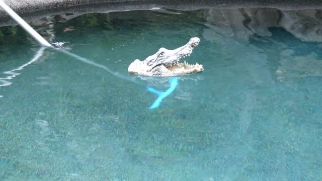 Floating Crocodile Toy video