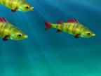 Floating fish (loop) video