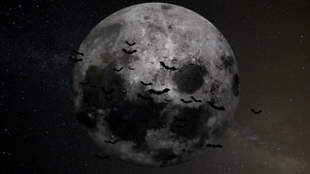 A flock of bats on the background of the moon video