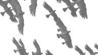 Flock of Doves video