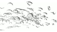 Flock of Doves (loopable) video