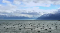 Flock of ducks floating on stormy lake water in Alps, beautiful wild nature video