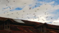 A flock of pigeons flies over the roof of the house video