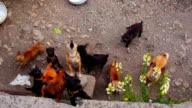 Flock of puppies video
