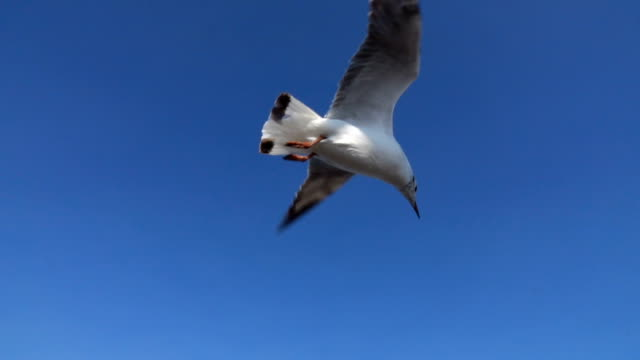 Flock of Seagull flying over seascape,Slow motion video