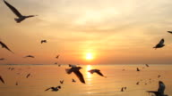 Flock of Seagulls fly over sea in sunset video
