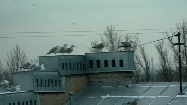 Flock of Seagulls Over a Seaside Town video