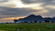 Flock of sheep grazing at sunset video