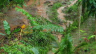 Flood in garden video