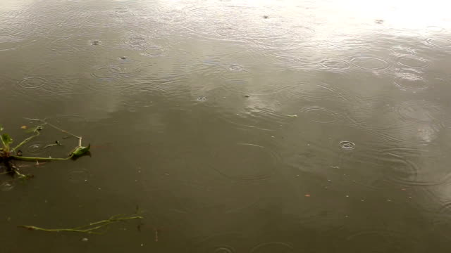 Flood in river video