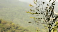 Floresta da Tijuca video