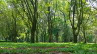 Floresta video
