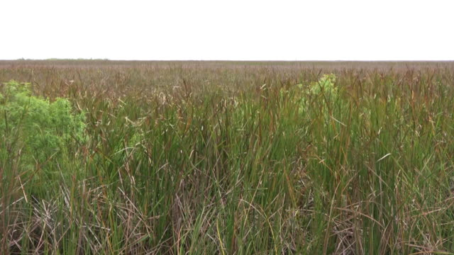 Florida Everglades Landscape video