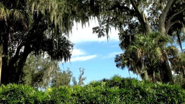 Florida video