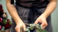 Florist cuts a eucalyptus branch with shares for flower arrangement video