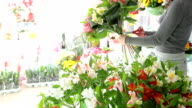 Florist Working In Flower Shop video