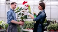 Florists taking care of anthurium video