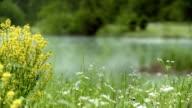 R/F Flower Agains Lake In Mist video
