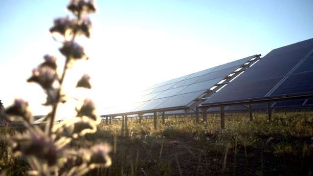 Flower and Solar Panel video